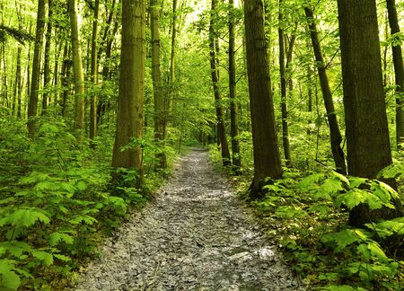 trailway: green forest Stock Photo