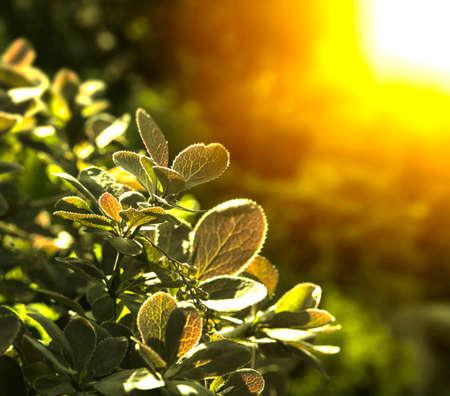 natural summer background