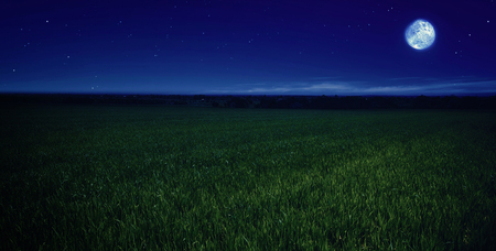 moonlit: moonlit night in wheat field