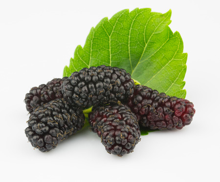 deliciously: Ripe mulberry Stock Photo