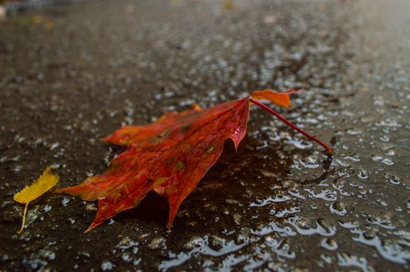 leaf from a tree in the rain