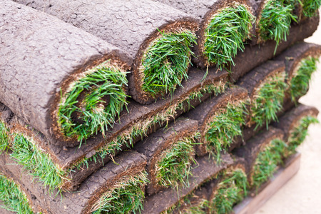Sod Grass Rolled on a Pallet