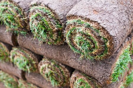 Sod Grass Rolled in a Stack