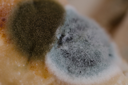 Close up, macro photography of mold on moldy food Stock Photo