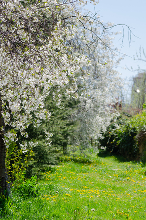 lovely fields flowery roads,spring day,outdoor, Banque d'images - 100079840