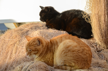 The yellow cat and the black cat are sleeping On the fishing nets. Stock fotó