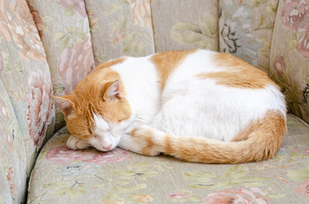 A domestic cat sleeping on sofa chair in front of a house Stock Photo
