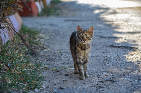 A cute cat is  looking at the camera on street. Archivio Fotografico