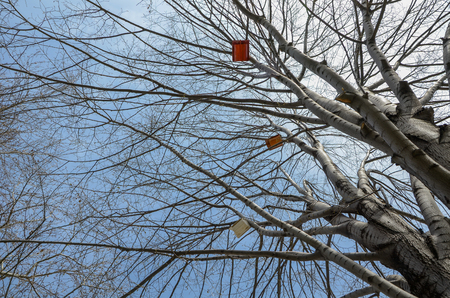 Bird houses are hanging from tall tree branches 版權商用圖片