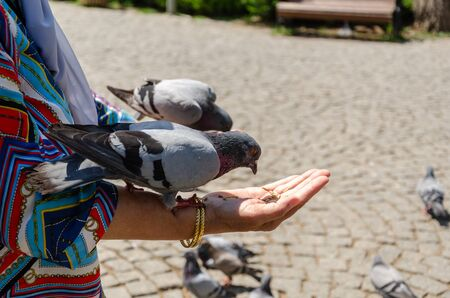 Pigeon is eating grain from woman's hand at the park.