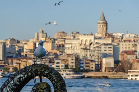 Istanbul,Turkey - January 25, 2020: Seagull and in the background Istanbul view and Galata Tower.