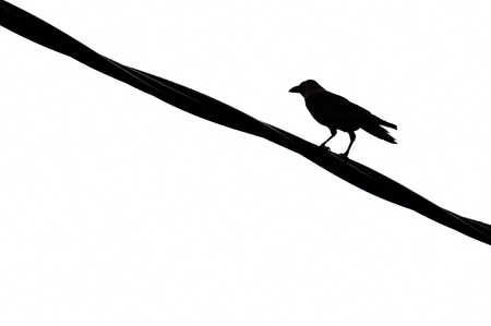 Silhouettes of the birds sitting on electric wire photo