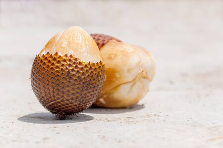 salak: Salak fruit or snake fruits on hard background Stock Photo