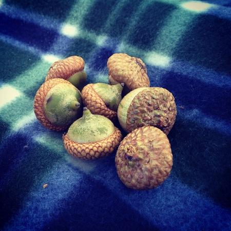 Acorns on a picnic blanket in Central Park Banco de Imagens