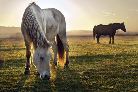 rancho: Caballo fuera en la hierba en la niebla de la ma�ana