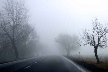 Autumn road and fog and the silhouette of trees Stock Photo - 8360329