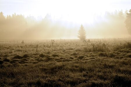 Sunrise in the mist above the forest in autumn