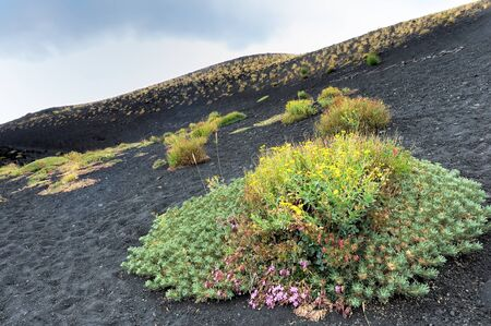 rock bottom: Blooming flowers at the foot of Mount Etna Stock Photo