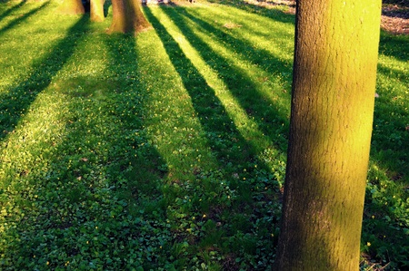 greeen: Greeen grass, trunk with long shadows and yellow sunset Stock Photo