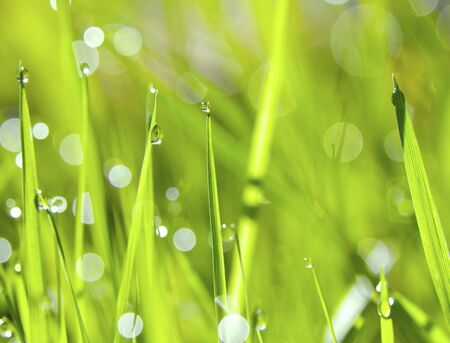 An abstract green grass background with drops of water photo