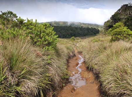 For�t, la savane, et de l'eau � Horton Plains photo
