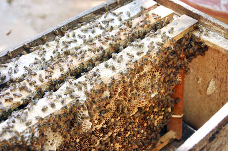 Working bees on honeycomb in the hive photo