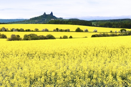 rapeoil: Yellow fields, and the silhouette of the castle Trosky in the background
