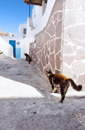 panarea: The narrow street with two cats, the  island of Panarea