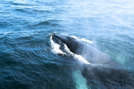 A humpback whale photo