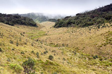 For�t de brouillard, de la savane, et de l'eau � l'automne, Horton Plains, au Sri Lanka photo
