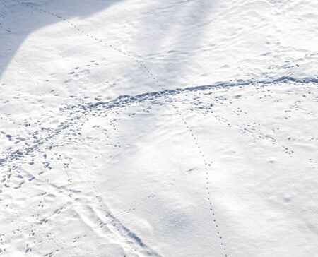 Human and animal tracks in the snow, view from above photo