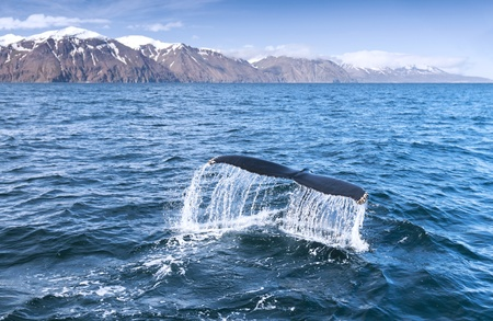 A humpback whale Stock Photo