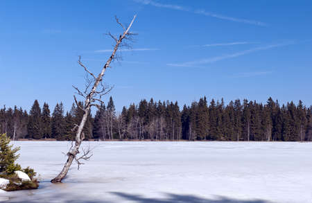 Birch tree on the edge of a frozen lake photo