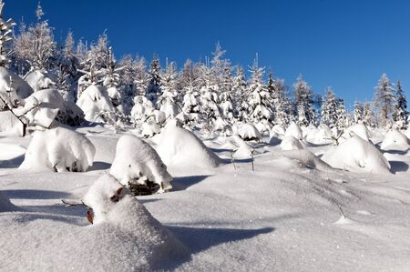 Trees in the forest covered with snow photo