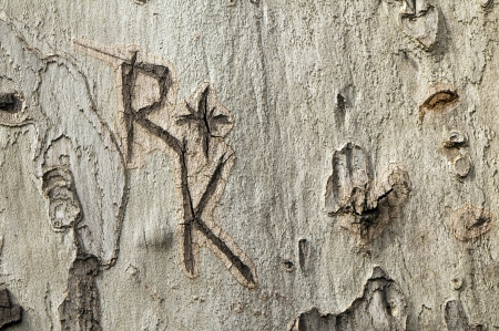 Letters R and K engraved on a tree trunk  photo