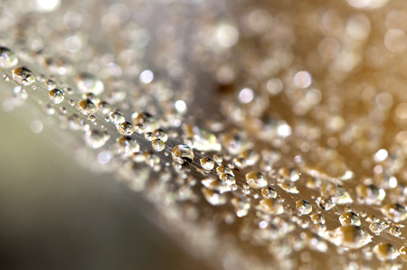 spider net: Water drops on a spider net early morning Stock Photo
