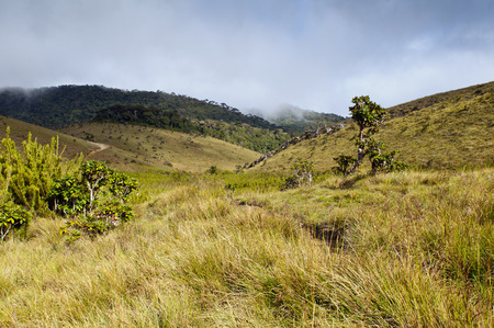 montane: The landscape with montane grasslands and montane evergreen forests. Horton Plains National Park. Sri Lanka Stock Photo