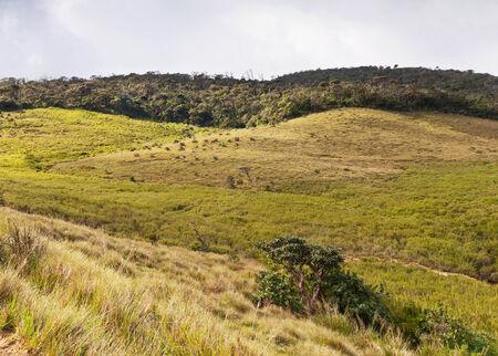 montane: The landscape with grasslands and evergreen forests. Horton Plains National Park. Sri Lanka Stock Photo