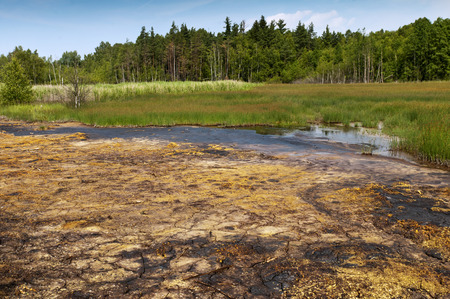 peaty: The landscape with peat and fens. National Nature Reserve. Stock Photo