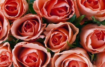 rosas naranjas: Varias rosas naranjas, vistos desde arriba (fondo) Foto de archivo