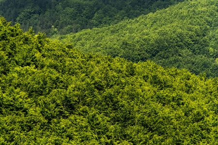 treetops: Green forest (abstract background), treetops