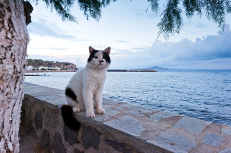 cat island: A cat sitting on a wall. Nisyros, a Greek island. Stock Photo