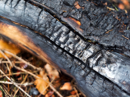 charred: A close up of a charred wood in the forest