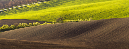 sulight: Spring wavy landscape with green and brown field and tree in the evening.