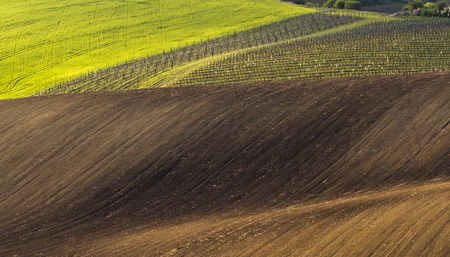 sulight: Spring wavy landscape with green and brown field and vineyard