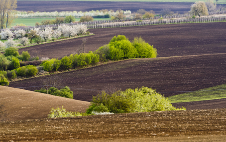 Spring wavy landscape with fields, trees and vineyards. South od Moravia, Czech Republic.