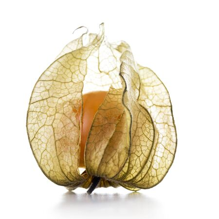 Physalis fruit with papery husk on a white background.  Stock Photo