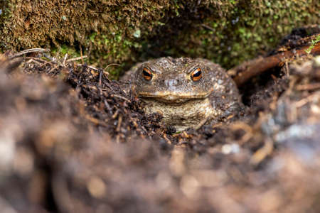 The portrait of a toad in a forest Standard-Bild