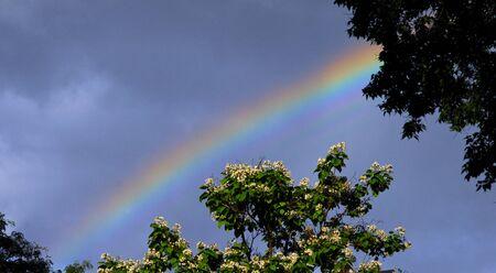 Rainbow with flowering tree