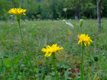 wildflowers Banco de Imagens